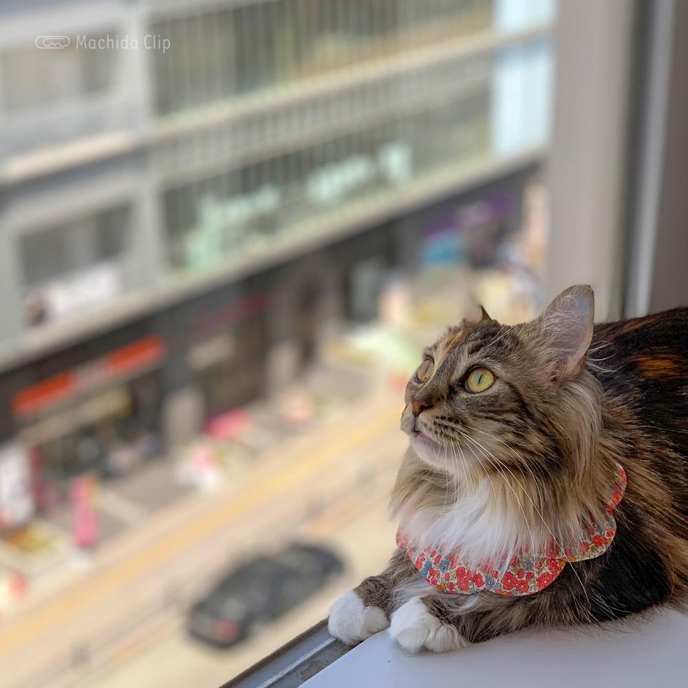 猫カフェ コックンの別荘の猫の写真