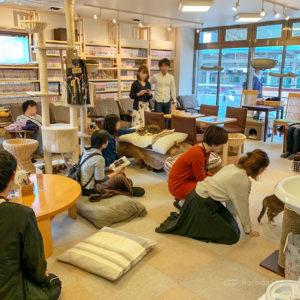 ねこのみせ 町田の猫カフェ!料金は10分150円  飲食物持ち込みOK!漫画やソファでくつろげるの写真