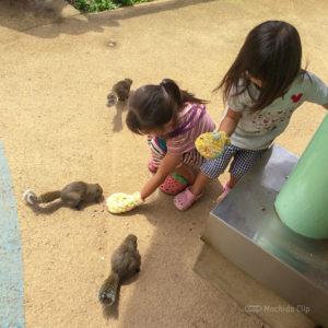 町田リス園の園内の写真
