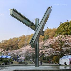 町田芹ヶ谷公園の桜&お花見情報2020!開花状況や桜祭りについて紹介の写真