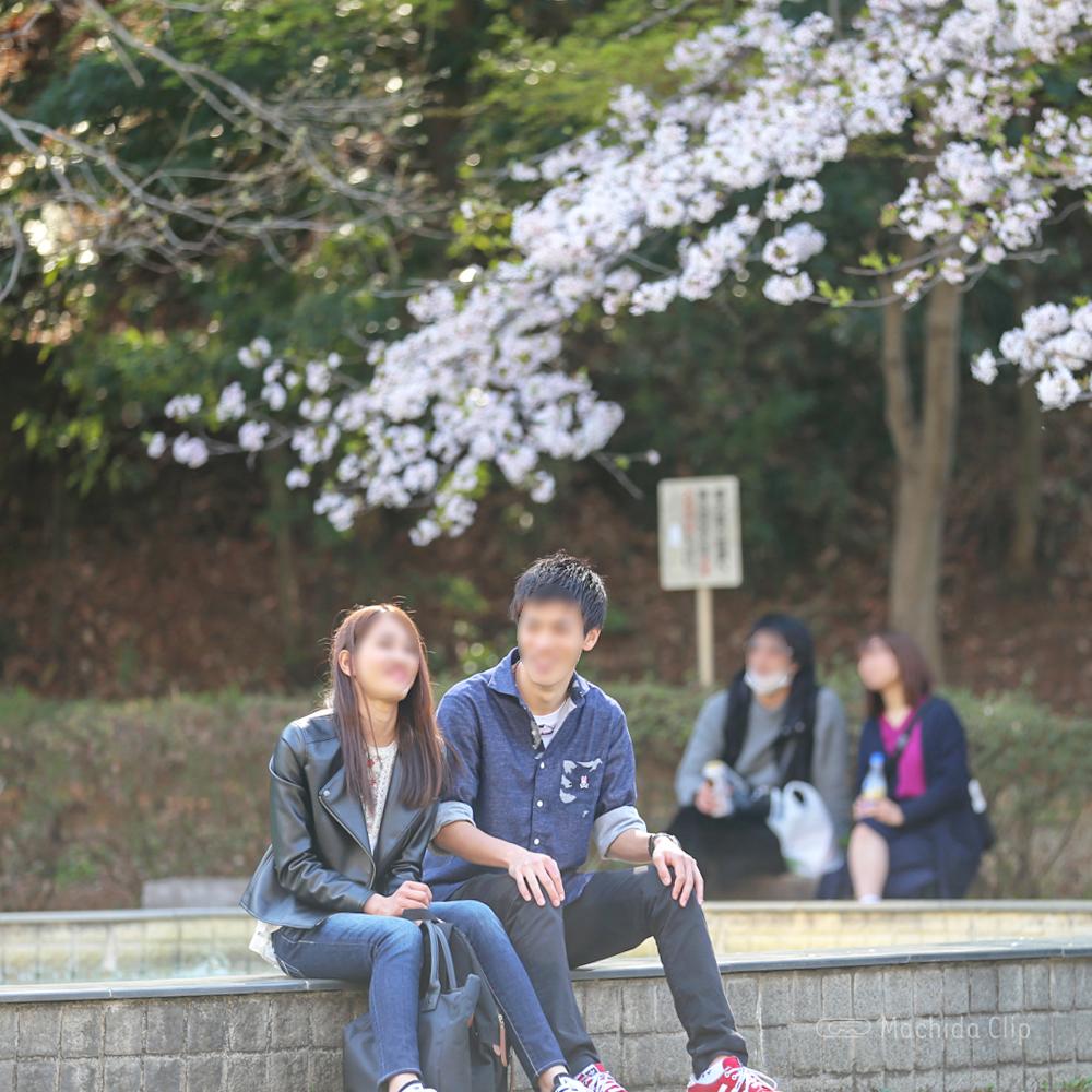 芹が谷公園の広場の桜の写真