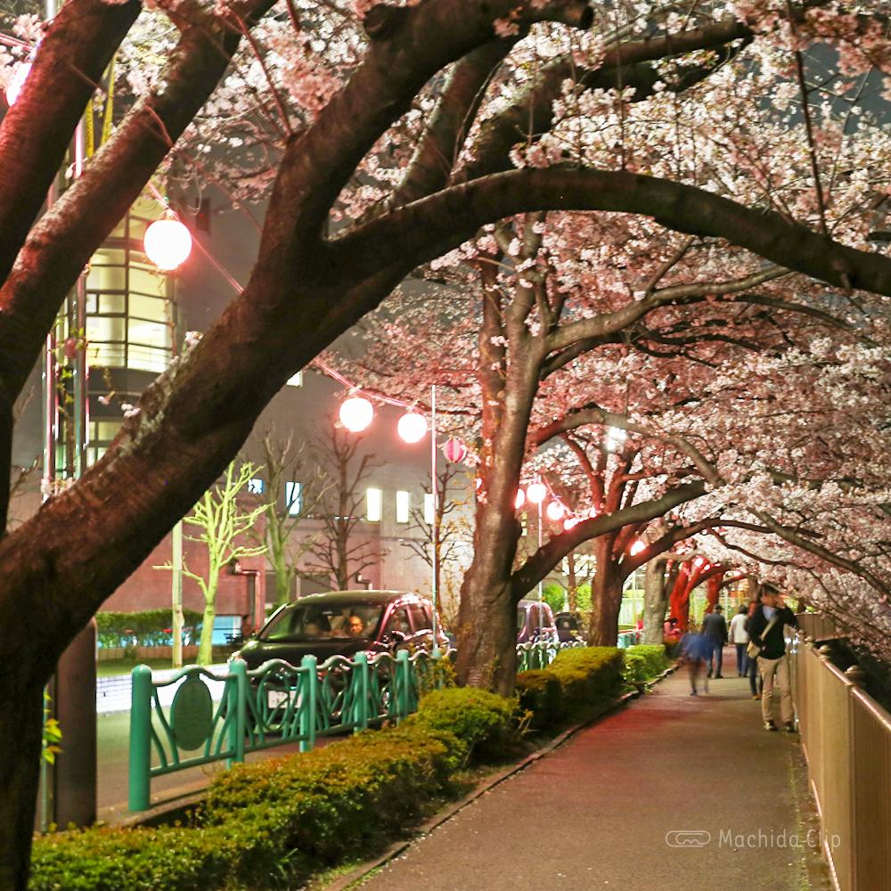 恩田川の桜のライトアップの写真