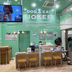 町田 ペットショップ 子犬、子猫のお店からその他小動物のお店まで!口コミ評価の高いおすすめ8選!の写真